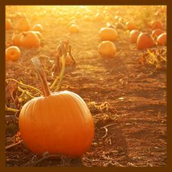 Elizabeth Colorado Harvest Festival