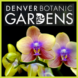 Orchid Showcase in Denver